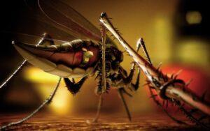 ज़ीका वायरस क्या है? इसके लक्षण और इससे कैसे बचें